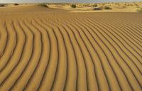 Ripples in sand dunes, Dubai Desert Conservation Reserve, Du