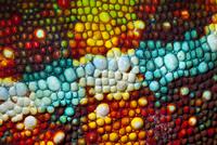 Panther chameleon close-up of skin {Furcifer pardalis} red / 20070001293| 写真素材・ストックフォト・画像・イラスト素材|アマナイメージズ