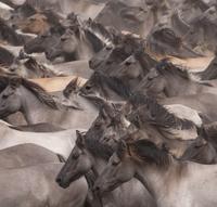 走るウマの群れ デュルメン種 20070001781| 写真素材・ストックフォト・画像・イラスト素材|アマナイメージズ