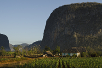 Viales Valley with Tobacco crop, Sierra Rosario Mountain Ran