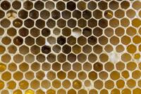 Macro shot of honey bee comb showing pollen-filled cells, UK