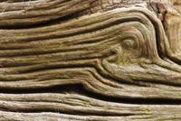 Patterns in fallen deadwood Oak. New Forest National Park, H