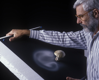 Photographer Yves Lanceau in his studio studying the spore d