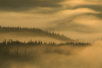 Morning mist over Spruce forest, Hattfjelldal, Helgeland, Nordland, Norway, September 2007
