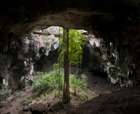 Calcehtok cavern, with its huge circular entrance and Ficus  roots descending into the cave, Yucatan, Mexico