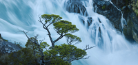Cohigue trees along shoreline at Rio Pascua headwaters gorge, where Lago O'Higgins pours through narrow canyon, Aisen Province,