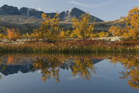 Birch trees reflected in water, autumn landscape,Rondane National Park, Oppland, Norway, September 2007