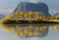 Nammatj mountain with autumn birches in the foreground, Sarek National Park, Laponia, Swede, September 2006.