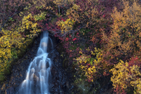 Hraunfossar waterfall and  autumn vegetation, Iceland.