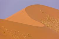 Sand dune abstract, Dune 45, Namib desert, Namibia, August 2008