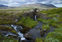 Stream running down a rift in the rift valley at the crest of the Mid-Atlantic Ridge, Pingvellir / Thingvellir National Park, Ic