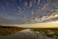 Sunrise over wetlands of Bamarru Plains, North West Territories, Australia, May 2009