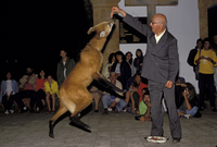 タテガミオオカミ 20070004548| 写真素材・ストックフォト・画像・イラスト素材|アマナイメージズ
