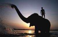 アジアゾウと象使い