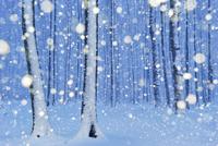 雪のヨーロッパブナの林