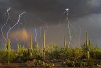 ソノラ砂漠と落雷