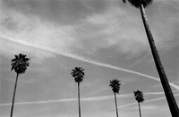 Five palm trees with jet trails