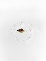 Snail surrounded by salt