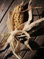Cob of corn 20071003625| 写真素材・ストックフォト・画像・イラスト素材|アマナイメージズ