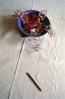 Flowers and pencil on tablecloth