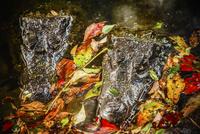 Alligator heads in swamp