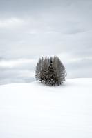 Lone winter trees