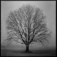 Big lonely tree