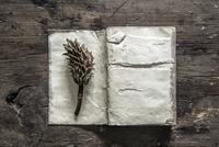 Tree specimen on book