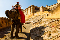 Ornately dressed elephant with man sitting on top outside the walls of Amber Fort. Jaipur, India