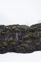 Moss covered volcanic rocks in snow. Iceland