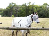 Horse covered up for protection in a field