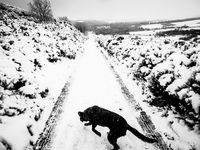Snow covered path with black dog in foreground. England, United Kingdom