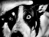 Close-up of hand stroking dogs head