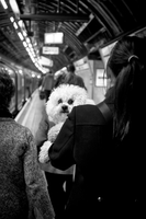 Woman holding a dog in the London underground. London, England, United Kingdom