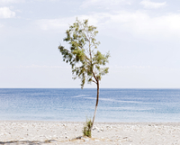 Tree with a curved trunk stands on a Mediterranean beach. Crete