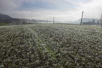 Field covered by frost in the countryside. France