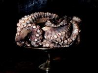 Still life of Octopus tentacles