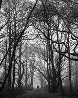 Figure in misty woodland. England, United Kingdom