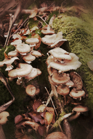 Close-up of wild mushrooms in the forest