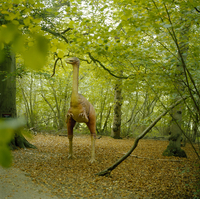Dinosaur model stands in a wooded glade with the ground covered in leaves. Norfolk, England, United Kingdom