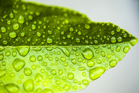Close-up of raindrops on a bright green leaf