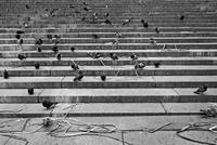 Pigeons on stone steps. New York, U.S.A
