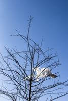 White plastic bag caught in a tree