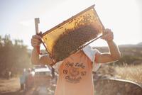 Beekeeper inspecting honey comb in sunlight. Greece