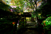 Gio-ji Temple