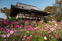 Hannya-ji Temple 20073000809| 写真素材・ストックフォト・画像・イラスト素材|アマナイメージズ