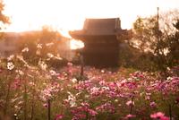 Hannya-ji Temple 20073000810| 写真素材・ストックフォト・画像・イラスト素材|アマナイメージズ