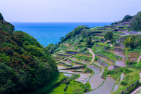 Hamanoura Rice Terrace