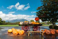Koiwai Farm 20073001097| 写真素材・ストックフォト・画像・イラスト素材|アマナイメージズ