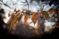 Autumn Ends 20073001147| 写真素材・ストックフォト・画像・イラスト素材|アマナイメージズ
